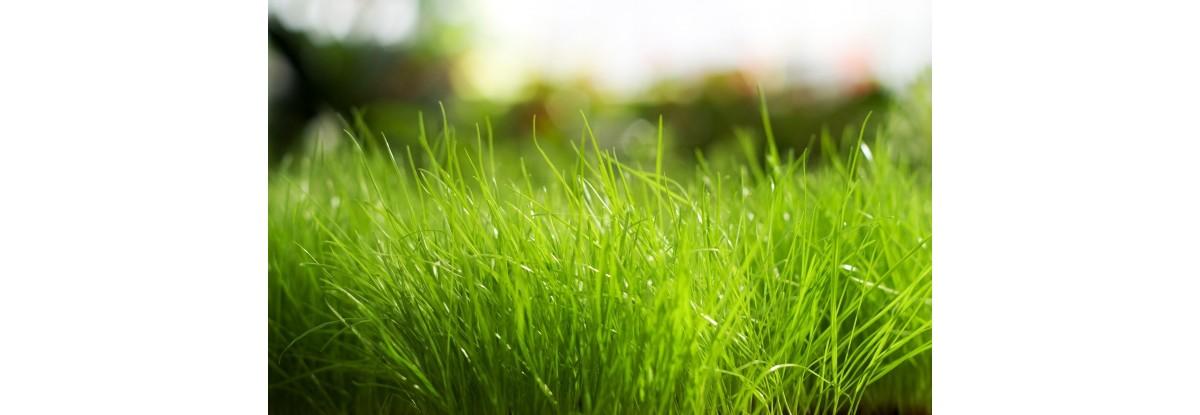 GRASS-1200x415